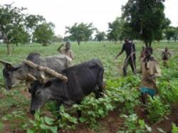 agricultura in africa