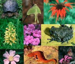 Actiuni de conservare a biodiversitatii si promovare a dezvoltarii durabile a Sitului Natura 2000