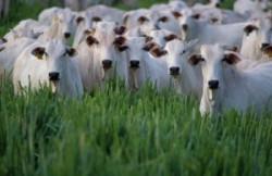 Combaterea schimbarilor climatice prin efectivele de animale