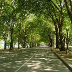 defrisarea parcului brezoianu