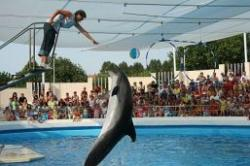 delfinul mark