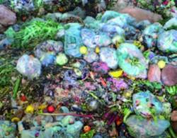 O imagine tipica - plastic in deseurile organice