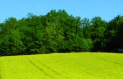 Energie pura: resurse regenerabile