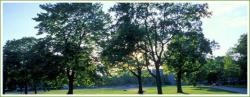 synthet-tree.jpg