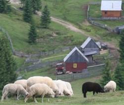 Spirit ecologic in Mediul Rural