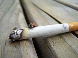 Procentul fumatorilor este in scadere in majoritatea tarilor dezvoltate