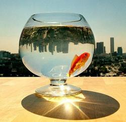Pestii din acvariu au nevoie de mai mult decat un singur prieten