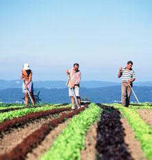 Livrarile la domiciliu, secretul succesului in agricultura ecologica