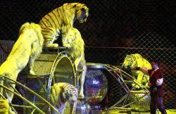 animale la circuri
