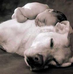 baby-dog606.jpg