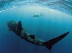 90% din speciile de pesti mari din oceane sunt pe cale de disparitie
