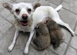 Mama adoptiva