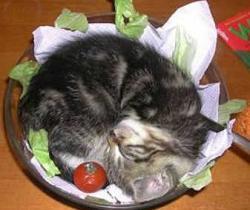 pisica1.jpg