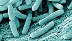 Probioticele ?in la distan?? infec?iile digestive