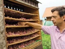 Trandafiri ecologici cultivati in Transilvania