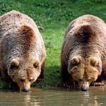 Seminar pentru definirea coridoarelor ecologice pentru migrarea ursului brun
