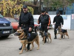 caini politisti