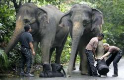 elefant cu papuci