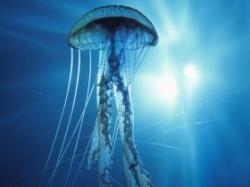 meduze ucigase