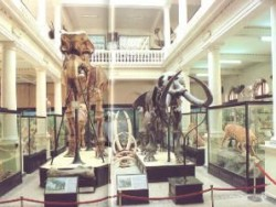 Muzeul Antipa ar putea trece in subordinea Ministerului Mediului
