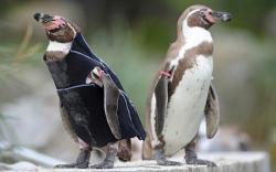 pinguin Ralph