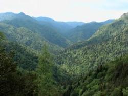 """Salvati Muntele – """"Ultima Resursa"""" a Romaniei a ajuns in Muntii Vrancei"""
