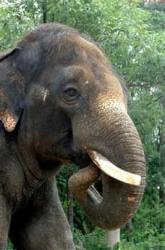 elefant Seul