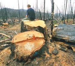 exploatarea forestiera