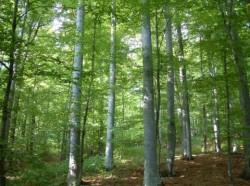 Peste 220 de sancţiuni aplicate pentru protejarea Fondului Forestier