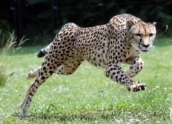 Top 10 cele mai rapide animale de pe Pământ