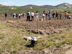 275 de hectare de teren, pregatite pentru impadurire in judetul Constanta