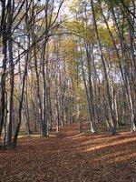WWF: Romania detine, la ora actuala, aproximativ 2,4 milioane hectare de padure administrate responsabil