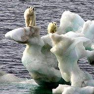 Incalzirea globala a devenit o problema scapata de sub control