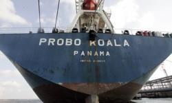 nava Probo Koala