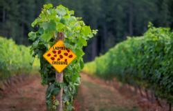 organic-vineyard.jpg