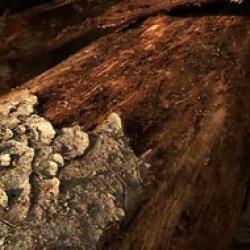 rezervatia naturala muntii rodnei