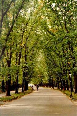 "SGU a ""coafat"" copacii si spatiile verzi din Ploiesti."