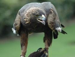 """Asociatia """"Alutus"""" si Societatea Romana de Ornitologie au demarat, azi, proiectul de educatie ecologica """"Pasarile. Aripile viitorului"""""""