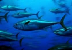 Pescarii au protestat fata de ordinul Ministerului Mediului de a interzice pescuitul 135 de zile pe an