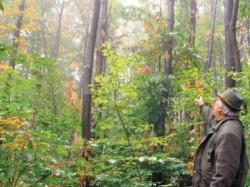 Simpozion dedicat salvarii padurilor de castani