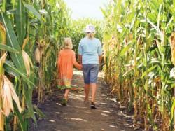 culturi modificate genetic
