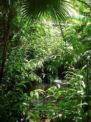 padure_tropicala.jpg