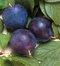Beneficiile prunelor