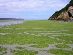 Oportunitatea afacerii cu alge - comercializare si provocari