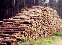 circulatia lemnului