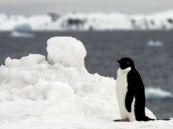 O treime din biodiversitatea marina polara este amenintata cu disparitia in contextul schimbarilor climatice