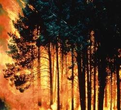 Reguli si masuri privind prevenirea incendiilor in anotimpul secetos