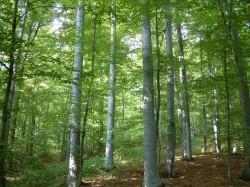 România a tăiat anul trecut câte 13 hectare de pădure la fiecare oră