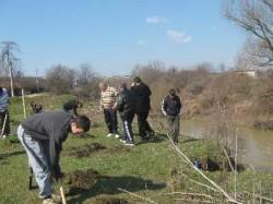 Campanie de plantare de pomi în municipiul Dorohoi