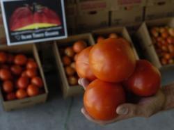 tomate dulci
